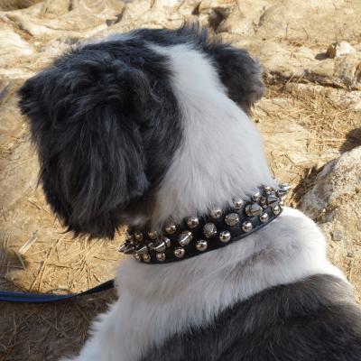 collier pour chien : collier à clous